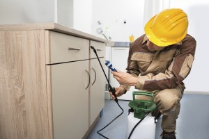 Pest control worker spraying pesticides on a wooden drawer
