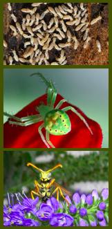 Pest Control Allentown